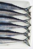 Свежий needlefish для здорового питания Стоковые Изображения RF