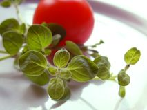 свежий oregano Стоковая Фотография RF