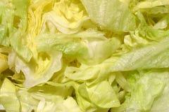 свежий shredded салат Стоковые Фотографии RF