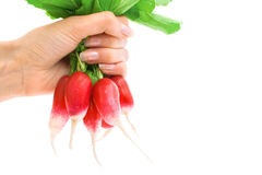 свежим белизна редиски руки изолированная удерживанием красная Стоковое Фото