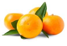 4 свежих апельсина мандарина Стоковое Фото