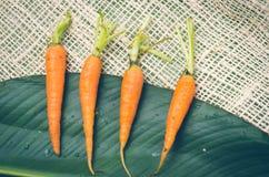4 свежих выровнянных моркови помещенной на большом зеленом цвете Стоковое Изображение