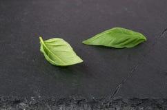 2 свежих зеленых листь базилика Стоковые Изображения RF