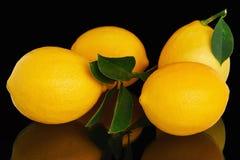 4 свежих зрелых желтых лимона Стоковые Изображения