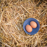 2 свежих яичка в голубых шаре и соломе Стоковое фото RF