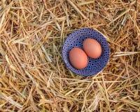 2 свежих яичка в солнечном свете Стоковая Фотография RF