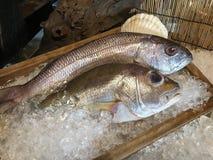 2 свежих fishs в деревянной плите льда Стоковое Фото