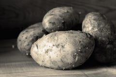 Свежо скомплектовал грязные органические картошки на деревянной предпосылке стоковое изображение