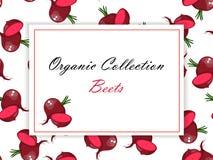 Свекла всех зрелых овощей красная Стоковое фото RF