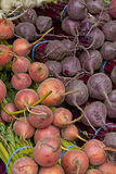 свеклы предпосылки vegetable Стоковое фото RF