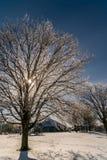 Сверкать в Солнце любит драгоценности Стоковое фото RF