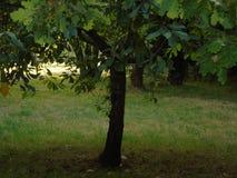 Сверкать деревья в Parkland Хартфордшира Стоковое Изображение