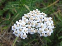 Сверкать цветки и листья в Parkland Хартфордшира Стоковое Изображение RF