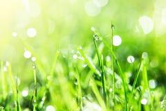 Сверкнать трава Стоковое Изображение
