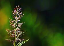 Сверкнать трава стоковая фотография