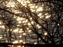 Сверкная вода увиденная через ветви Стоковое Фото