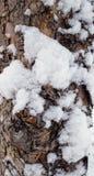 Сверкная расшива покрытая снегом на стволе дерева Стоковая Фотография RF