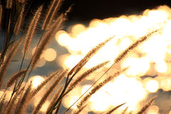 Сверкная свет от реки Стоковые Изображения