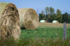 Свернутые и готовые, круглые связки в поле Стоковое Фото
