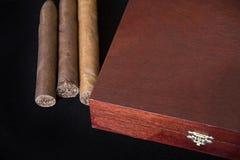 Свернутые сигары в группе на черноте и коробке хьюмидора Стоковое фото RF