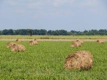 Свернутые bales сена Стоковое Изображение