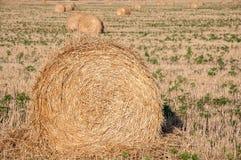 Свернутый пакет сена Стоковая Фотография RF