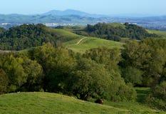 свертывать зеленых холмов страны Стоковая Фотография RF