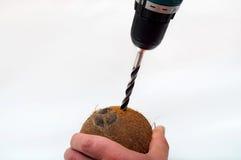 Сверлить в кокос Стоковое Фото
