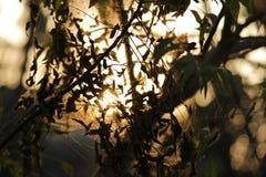 Света вечера Стоковая Фотография
