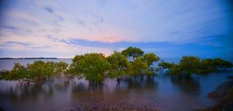 Света города за мангровами стоковые изображения