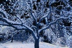 Света дерева Стоковое Изображение