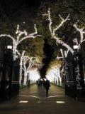 Света зимы праздника на дорожке выровнянной деревом стоковая фотография
