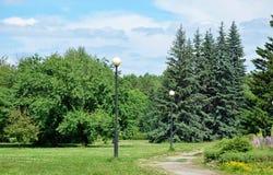 Света и спрус сини в парке Стоковое Изображение RF