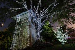 Света на дереве Стоковое Изображение RF