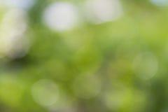 Света нерезкости, defocused зеленый цвет предпосылки Стоковые Фотографии RF