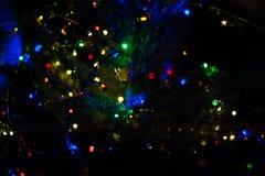 Света рождества на дереве Стоковое Фото