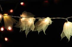 Света цветка Стоковое Изображение