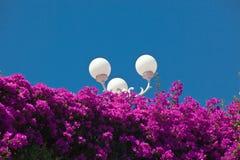 света цветков Стоковая Фотография