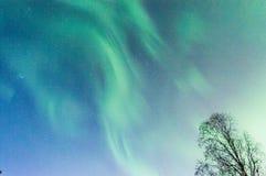Света Norrthern Стоковая Фотография