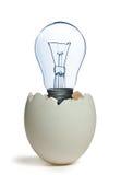 светильник яичка стоковое фото rf