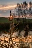 Светить захода солнца светлый через тростник осени Стоковая Фотография RF