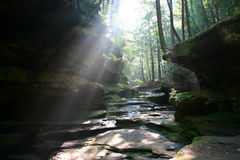 светит солнцу Стоковое фото RF