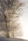 светлая зима стоковое изображение rf