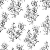 Светлая предпосылка от цветков контура Чертеж плана с цветками и зацветая травами Винтажная текстура для украшения ткани, бесплатная иллюстрация