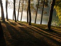 светлая тень Стоковые Фотографии RF