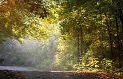 светлое солнце утра Стоковое Изображение RF