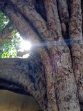 светлое солнце Стоковые Изображения