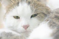 светлое тоновое изображение кота Стоковая Фотография RF