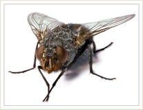 светлое тоновое изображение мухы Стоковые Фото