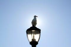 светлое усаживание чайки Стоковые Фотографии RF